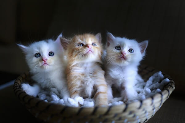 cat - your pets can help improve your health