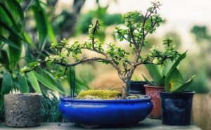 Easy decor tips to refresh our home with more greenery indoors