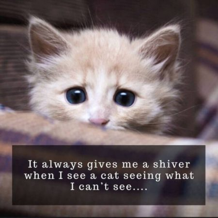 Funny quote of the day - It always gives me a shiver when I see a cat seeing what I can't see…