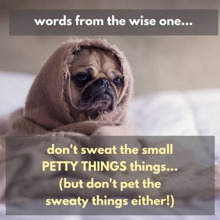 Inspirational quote for the week - funny quote: don't sweat the small petty things, but don't pet the sweaty things either